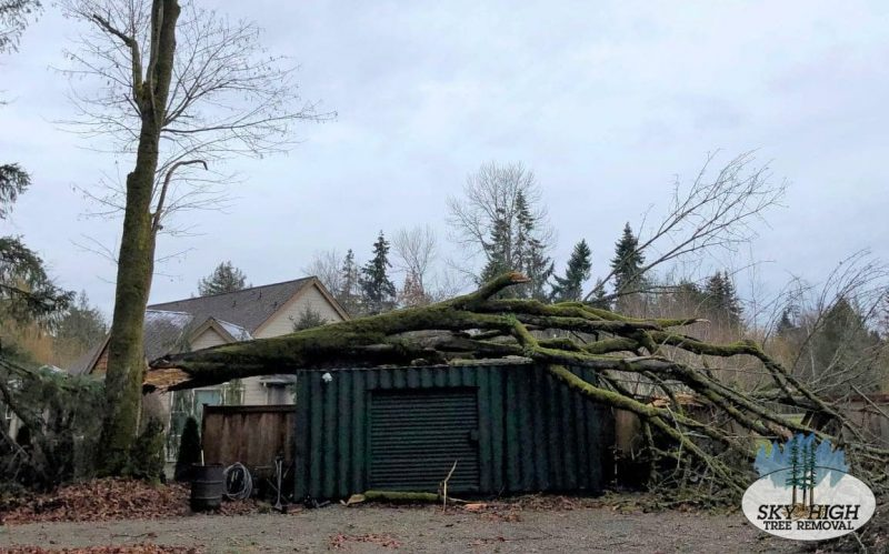 sky-high-tree-removal-emergency-services-before-800x499