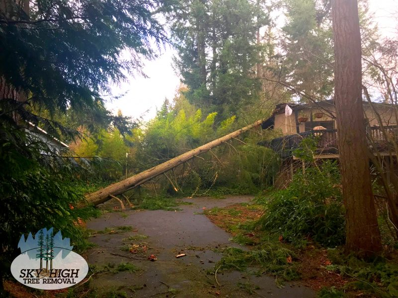 sky-high-tree-removal-tree-falls-on-house-before-800x600